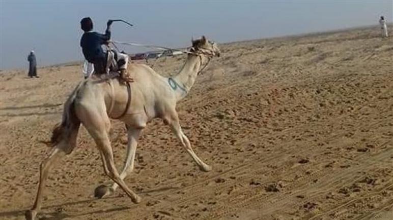 أكل المندي وسباق الإبل.. طقوس أهالي شمال سيناء في عيد الأضحى