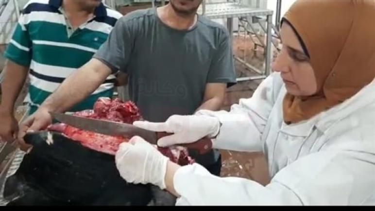 """10 صور ترصد إشراف """"بيطري جنوب سيناء"""" على ذبح الأضاحي"""