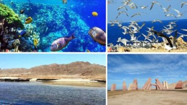 البيئة تراجع 30 محمية طبيعية للتأكد من كفاءتها.. البحر الأحمر وجنوب سيناء تستقبل 10 ملايين زائر سنويا